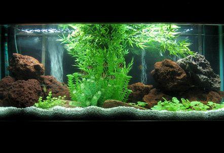 New 55gal setup  plastic plants