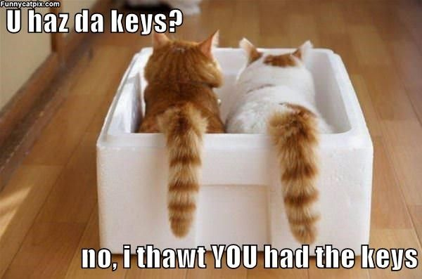 Key Factor Funny Cat Memes Crazy Cats Funny Animal Quotes