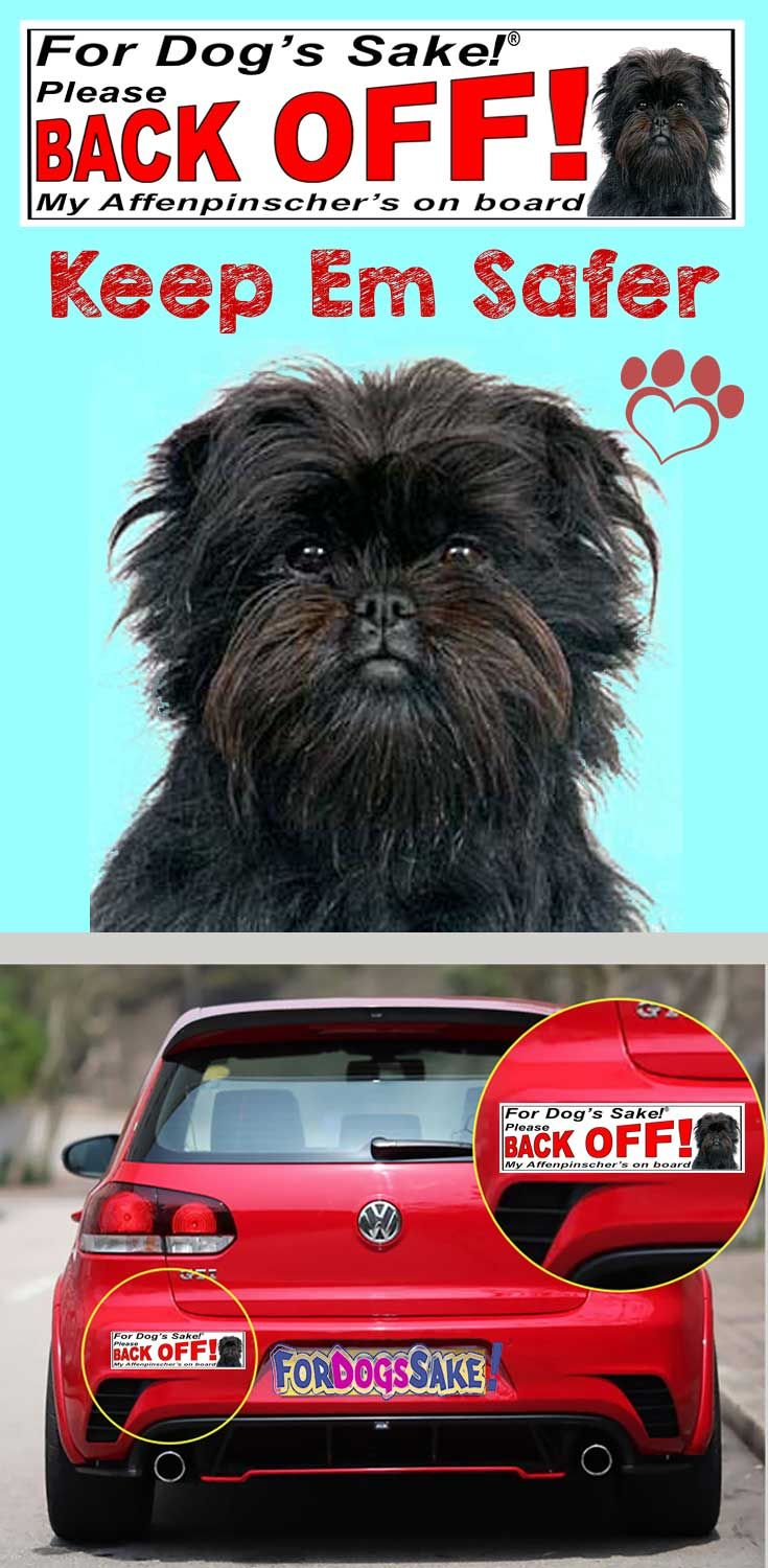 For dogs sake be careful when transporting your affenpinscher in your car its not you