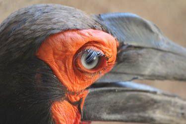 Wild bird portrait