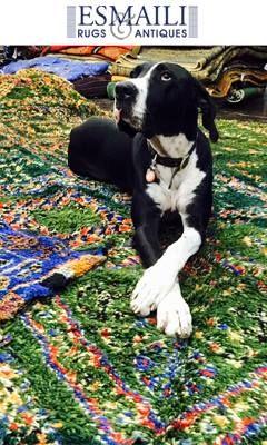 Delightful Carpet, Rugs