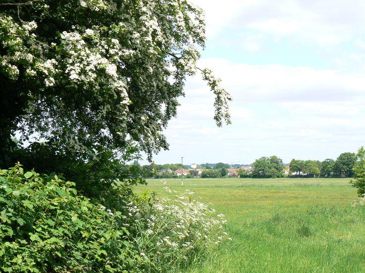Ashburton Playing Fields itt: Croydon, Greater London