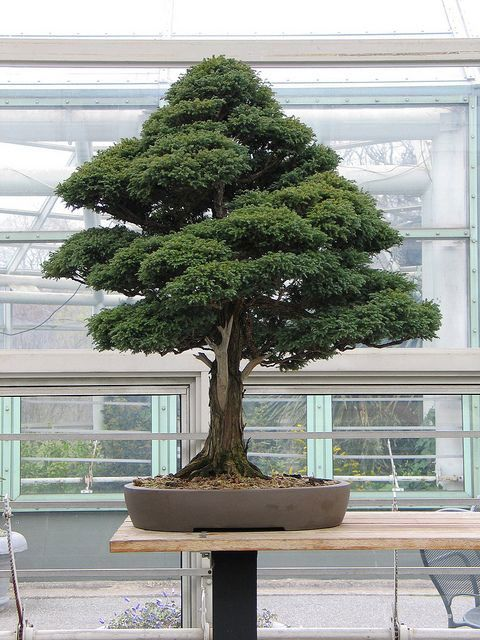 How to Succeed at Bonsai Gardening