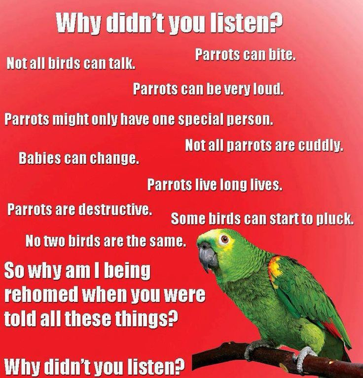 How long does the parrot live in captivity