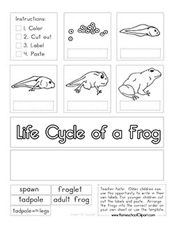 17 best images about life cycles science on pinterest clip art life cycles and pumpkin life. Black Bedroom Furniture Sets. Home Design Ideas