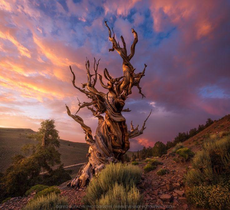The Aged II by Greg Boratyn - Photo 166815145 / 500px