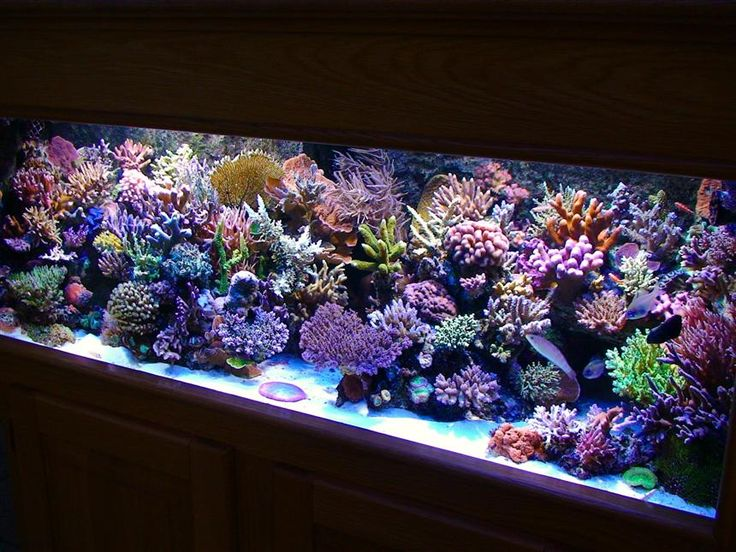 Best 25 saltwater tank ideas on pinterest coral fish for Best water for fish tank