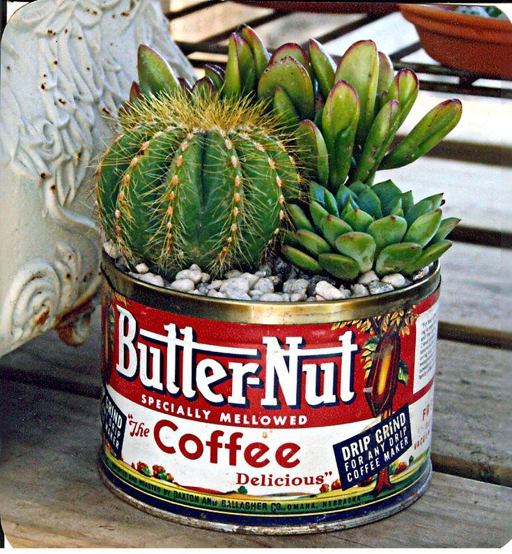Vintage Coffee Tin Cactus/Succulent - cactus succulent planter