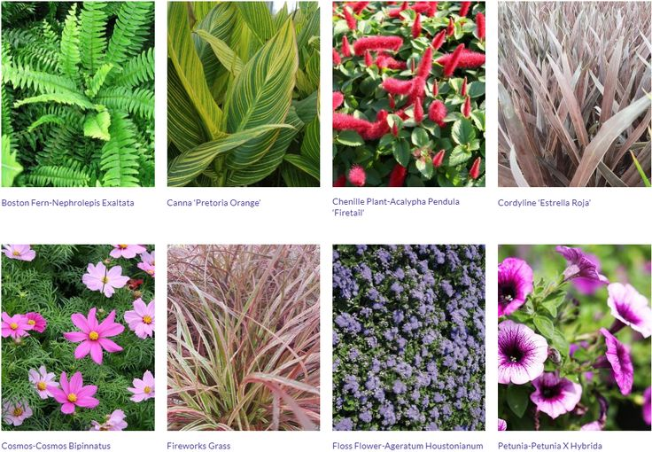 TERRA Greenhouses offers top quality annual plants for sun & annuals for shade and they complete their life cycle in one year.
