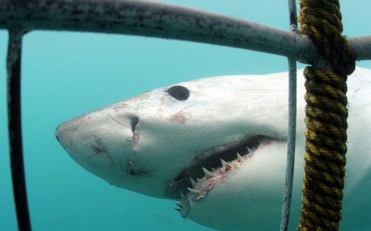 Охота на акул – экстремальный туризм не для слабаков