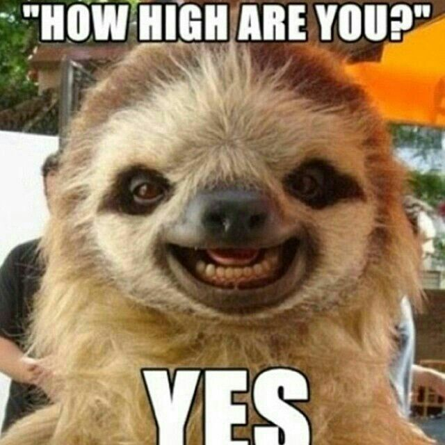 272 best Love me sum sloth!! images on Pinterest | Funny ...