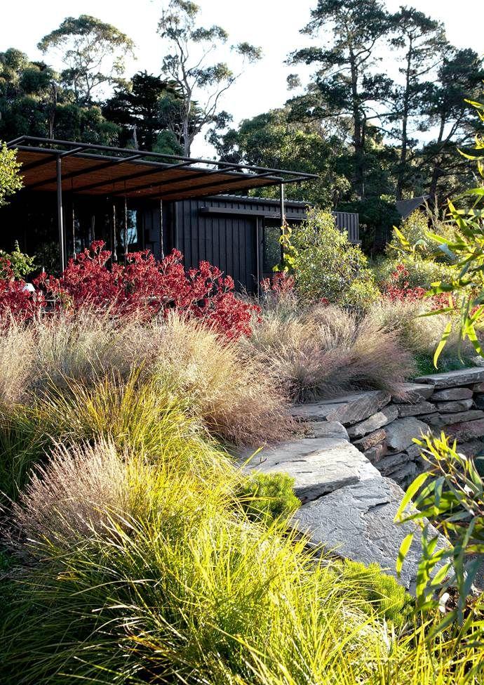 11 Native Australian Garden Design Ideas To Inspire Australian Garden Design Australian Garden Garden Landscape Design