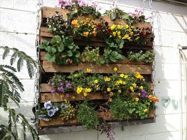 In this picture a beautiful wooden pallet planter is shown which is fixed at the wall in the garden and looks so good because it decorated with the different beautiful flowers which gives it perfect look and gives it beauty in the garden that is why it shining in the garden and looking so lush in the picture to watch.