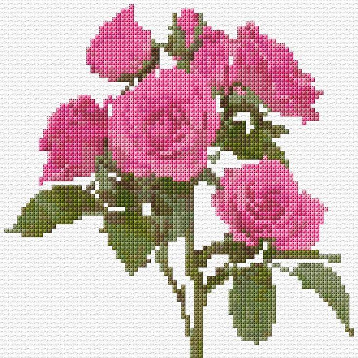 Pink Roses Free Cross Stitch Pattern