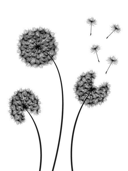 Dandelions silhouette, black over white.