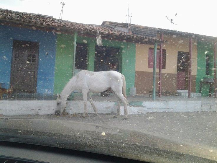 Cavalo na porta  das casas da Vila do Bola em  Pernambuco, onde nasceu minha irmã adotiva Margarida.