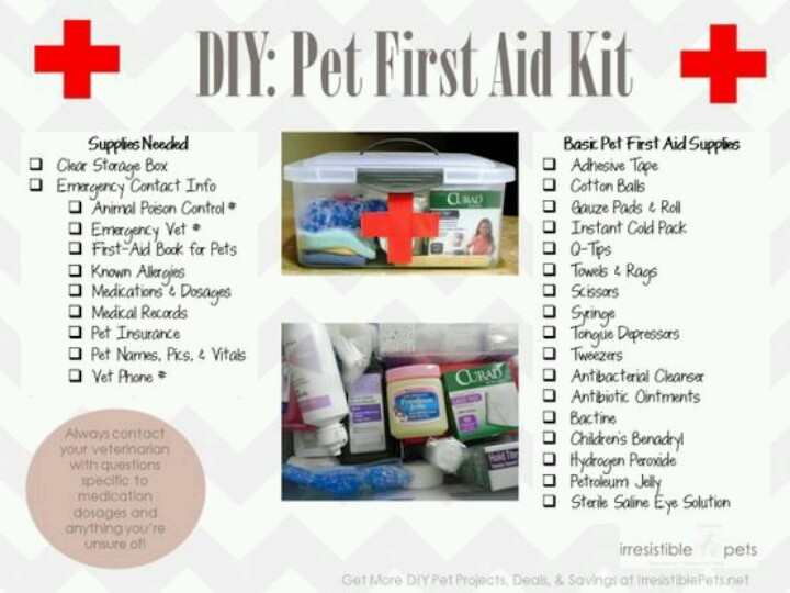 First Aid for Pets – 5 Important Tips | Hometown ... |First Aid For Pets Files