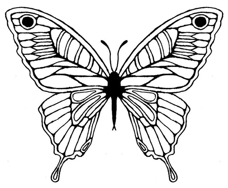 Butterfly Wing Drawing ClipArt