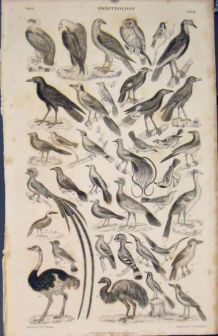 Zoology poster design - Vintage Botanical And Zoological Posters Have A Quiet Weirdness About Them This One