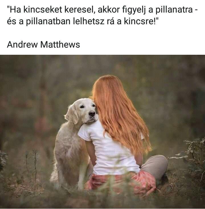 társkereső kutya barátok