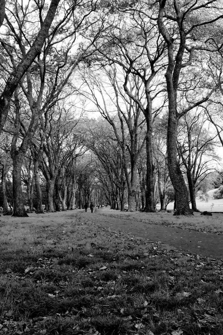 Black & white landscape taken in Cornwall Park, Auckland, NZ