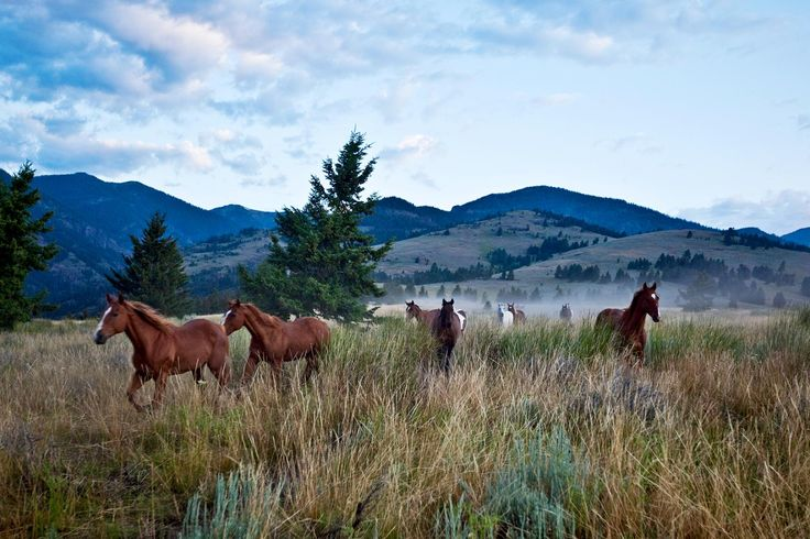 Top 10 Things to Do in Montana- Our favorite gems from the Treasure State.