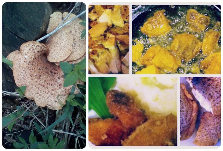How to cook pheasant's back or dryad's saddle mushrooms – A Magical Life