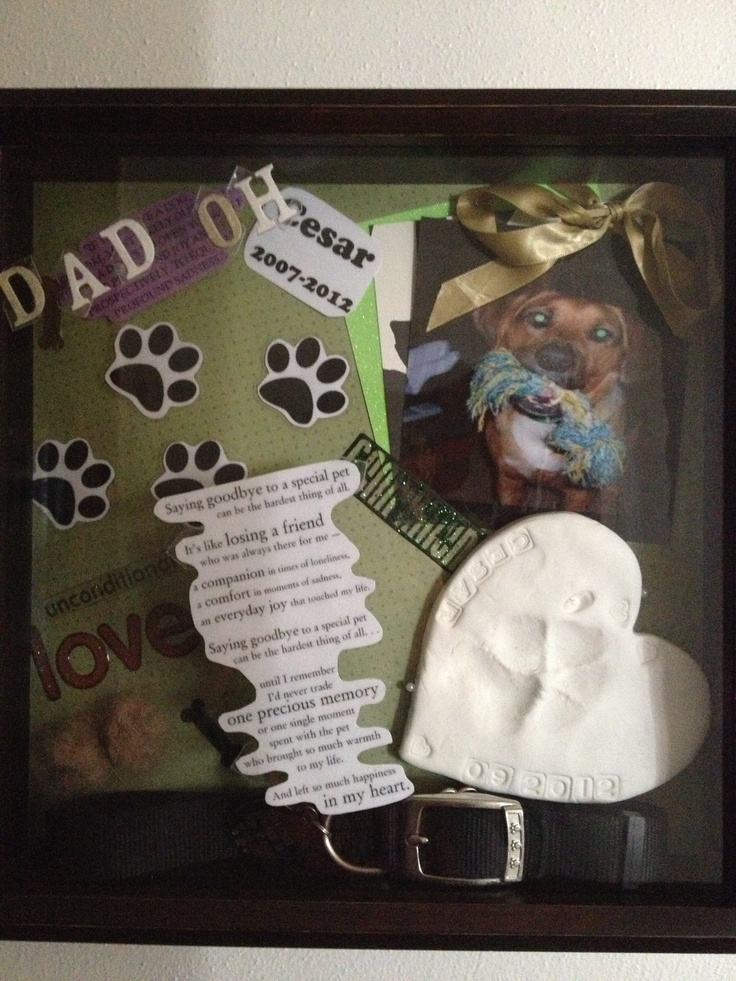 A shadow box I did for my dog that passed away 9/20/2012 his name is Cesar he was 5.. I miss him so much it's unreal