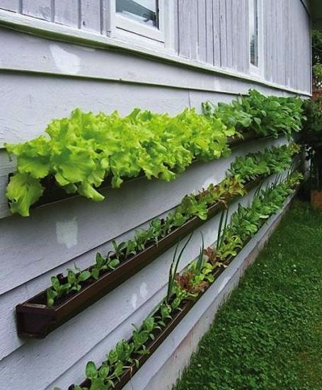 Gutter garden by Suzanne Forsling.