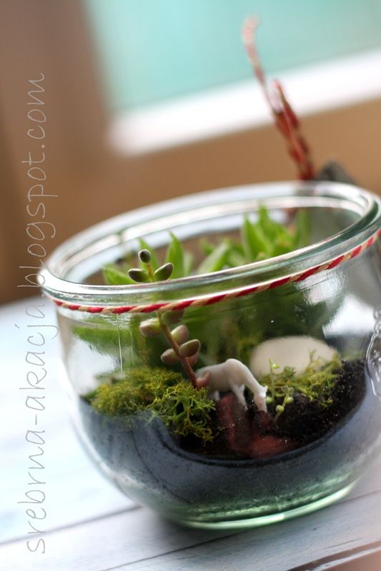 How can a horse fit into a jar with succulents? We'll, it can! :)