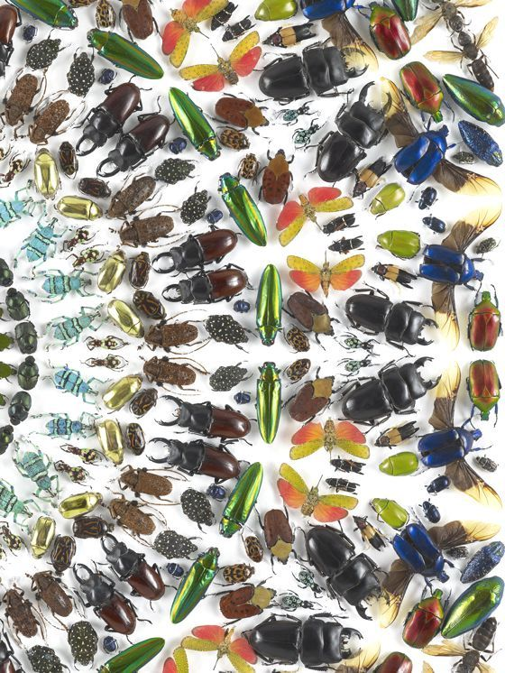 "patternprints journal: SOPHISTICATED PATTERNS INTO ""PAINTINGS ENTOMOLOGY"" SERIES BY DAMIEN HIRST"