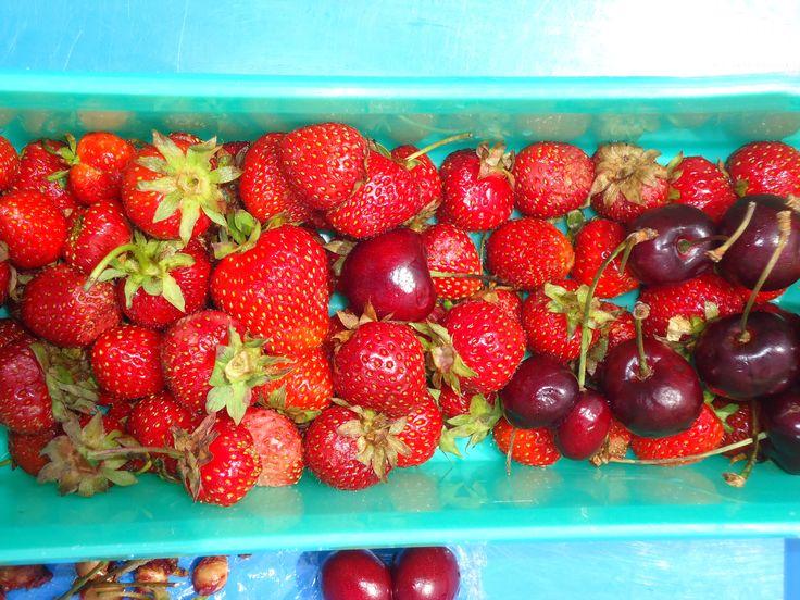 Fresh fruits from #PEI #PEITOURISM