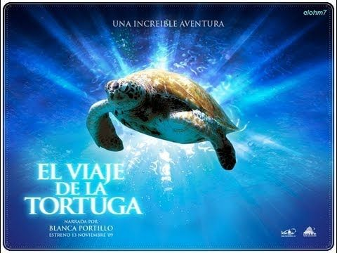 El viaje de la tortuga 2009 Documental - YouTube