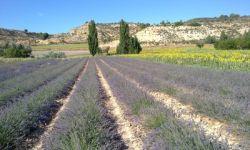 Agrila esencias y plantas aromáticas se dedica a la producción de esencias puras de una calidad extraordinaria,