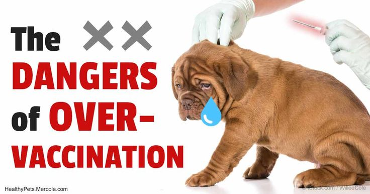 Many veterinarians still over-vaccinating pets when a simple blood test can actually tell them if the animal is immune.
