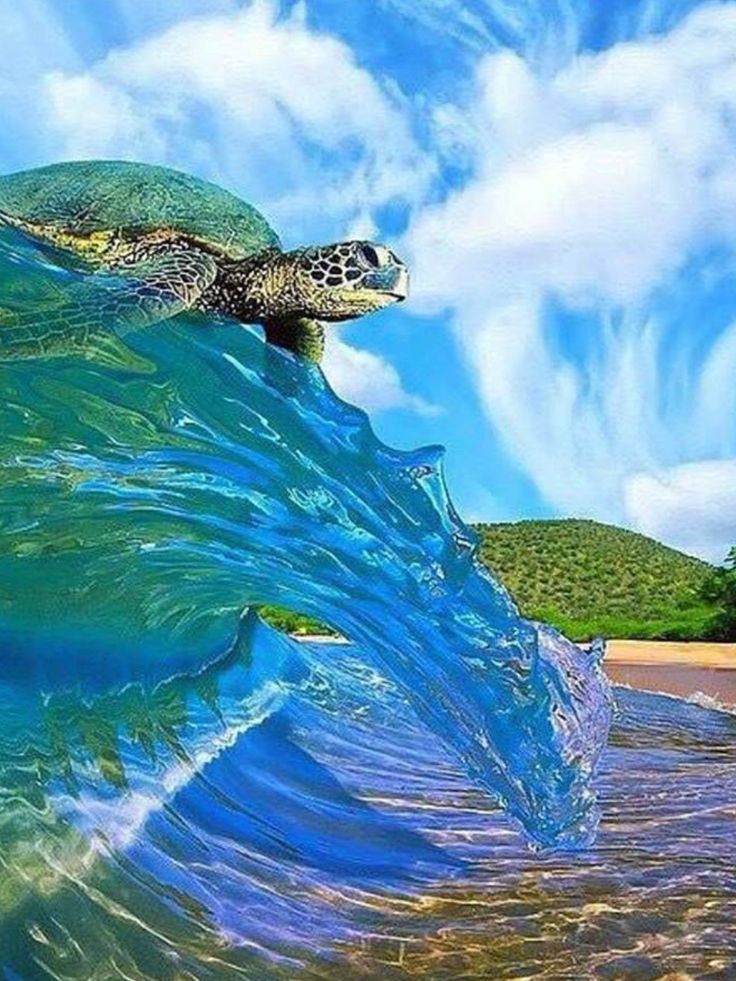 Riding the wave! ........................................................ Please save this pin... ........................................................... Because for real estate investing... Click on this link now! http://www.OwnItLand.com