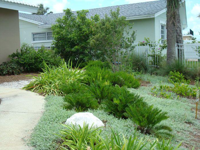 Coontie For Sale Largo And St Petersburg Growing Plants Plants Garden Design