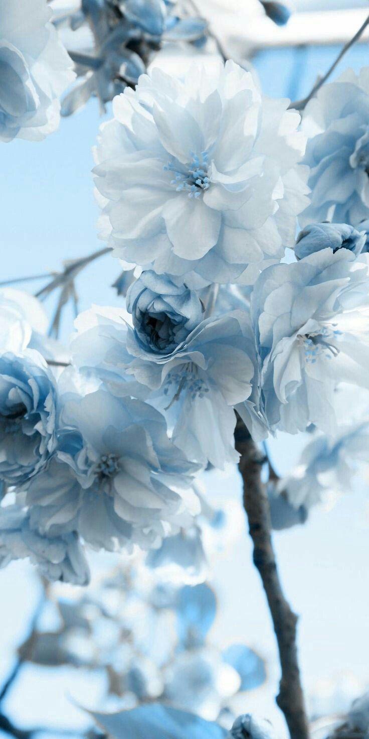Haiydi Baracat On Twitter Blue Aesthetic Pastel Light Blue Aesthetic Flower Aesthetic