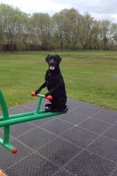 .hahahahaha......this would totally cool...to have a dog that could do this...:).....