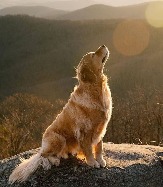 Good Vibes Picoftheday Photooftheday Dogs Dog Modeling Smiling Dogs