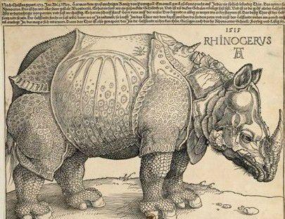 Rhinocéros - Dürer