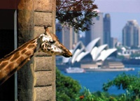 Taronga Zoo, Sydney/quite the view!