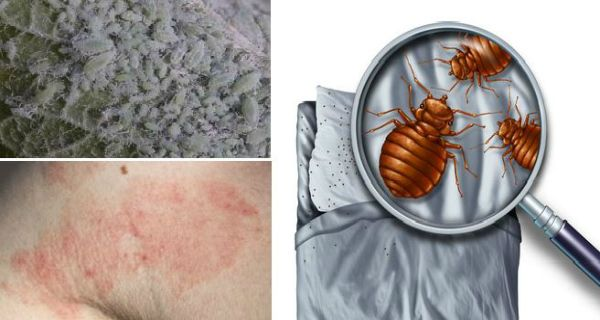 DID YOU KNOW THAT 1.5 MILLION DUST MITES MAY BE LIVING IN YOUR BED? DESTROY THEM BY DOING THIS ONE THING ONLY!