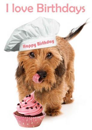 Verjaardagskaart van hond teckel met koksmuts en cupcake taartje. Hij lust wel een gebakje (@Karen van Gerner Fotografie)