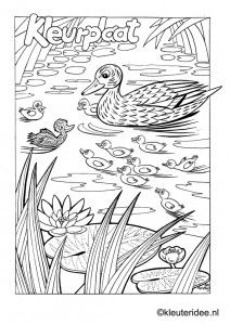 Kleurplaat eend met kuikentjes, kleuteridee , duck and ducklings preschool coloring, free printable