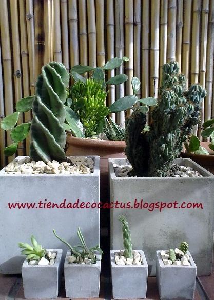 78 images about cactus on pinterest navidad metals and - Macetas de cemento ...