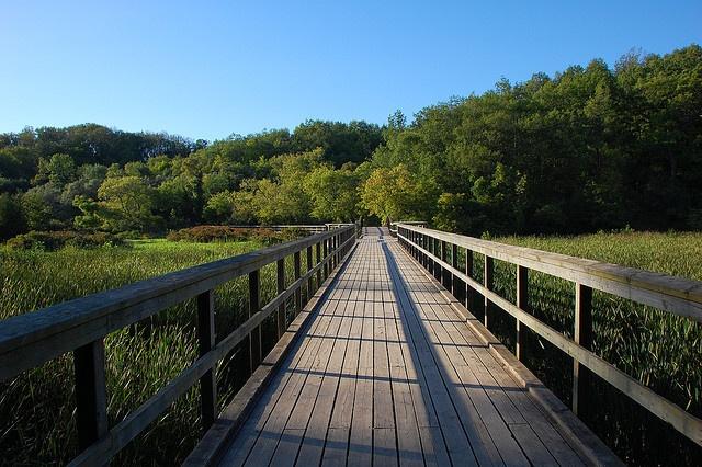 Grindstone creek boardwalk  Hamilton, Ontario