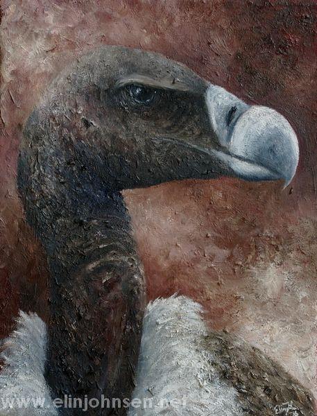 Indian Vulture/Indiagribb (Gyps indicus). Oil on canvas 2016. #endangered #endangeredspecies #art #wildlifeart #painting #oilpainting #artwork #artforconservation #oiloncanvas #vulture #indianvulture #gribb #indiagribb #bird #conservation #birdconservation #wildlifeconservation #portrait #kunst #maleri #oljemaling #fugl
