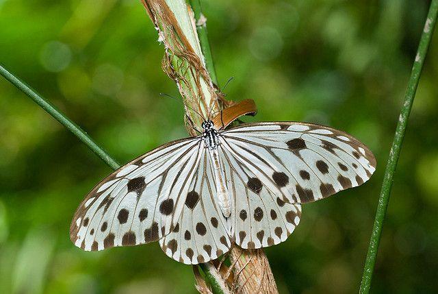 https://flic.kr/p/5oVifN | DSC_5735 copy | kl butterfly park