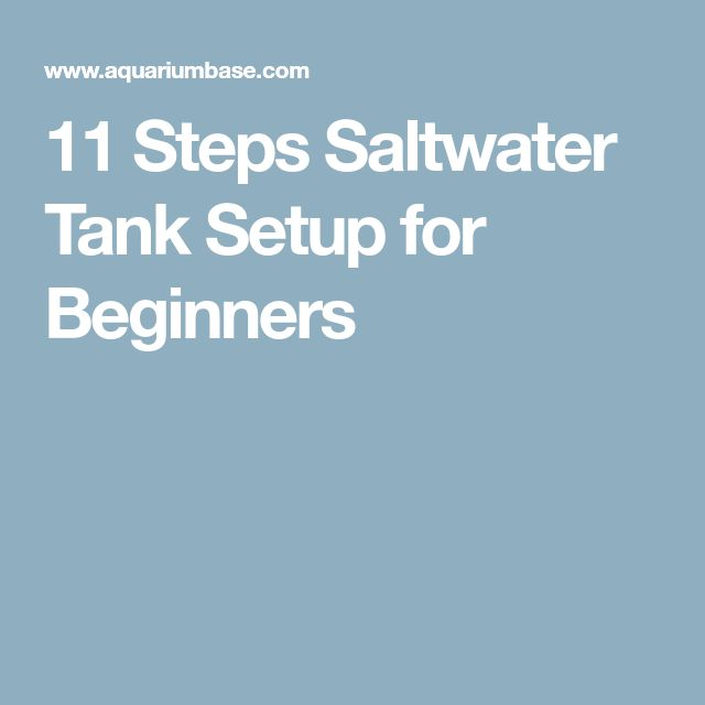 11 Steps Saltwater Tank Setup for Beginners